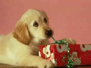 Recibiendo regalos